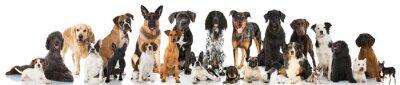 Плакат Родословная собаки