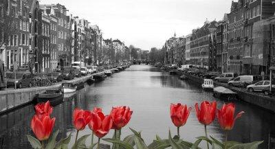 Плакат Красные тюльпаны в Амстердаме
