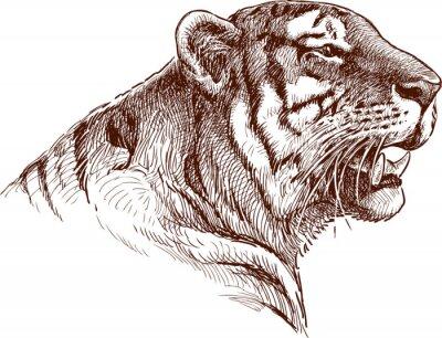 Плакат ревущий тигр