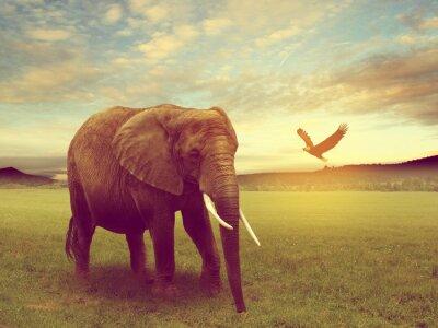 Плакат декорации, включая слона африки