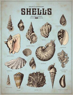 Плакат Sea-Life иллюстрации: ракушки (1)