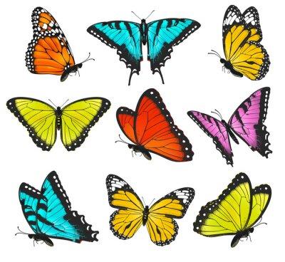 Плакат Set of colorful butterflies illustration