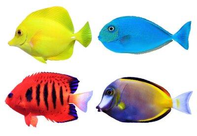 Плакат Набор тропических морских Fishs
