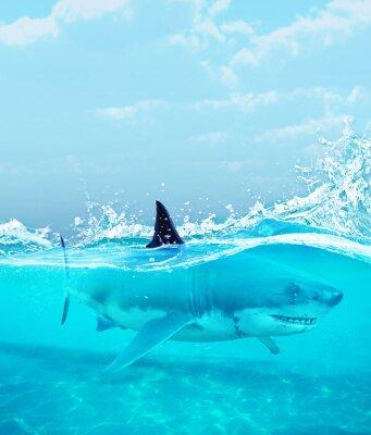 Плакат Акула под водой, 3d иллюстрации