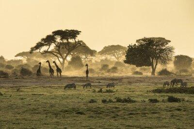 Плакат Силуэт ди жираф