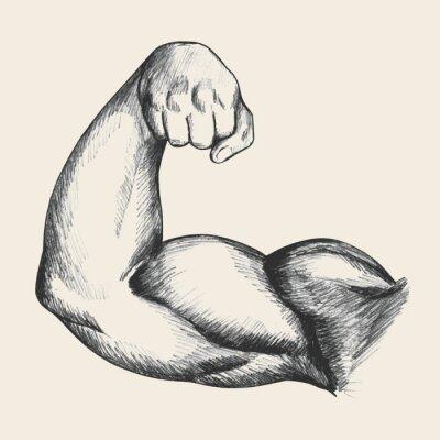 Плакат Эскиз иллюстрации мышечной человека мужского правой руке