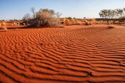 Плакат Небольшие растения в пустыне Западной Австралии