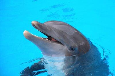 Плакат Śmiejący się Delfin Park ж Лоро па Teneryfie