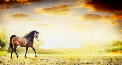 Плакат Жеребец лошадь работает рысь над осенней природы фона, баннер