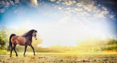 Плакат Жеребец лошадь работает рысь над фоне природы с прекрасным небом, баннер