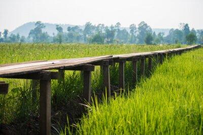 Плакат Солнечный рассвет в поле в Таиланде