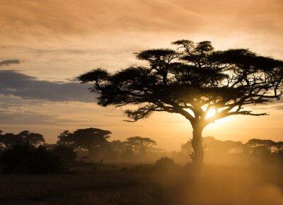 Плакат Закат на африканской саванне