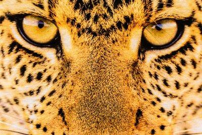 Плакат Текстура крупным планом печать ткани полосы леопарда