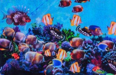 Плакат Текстура печати ткани полосатый аквариума
