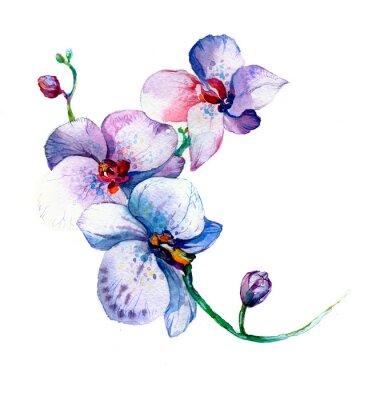 Плакат новый вид орхидеи акварель рисованной для открытки, изолированных на белом фоне