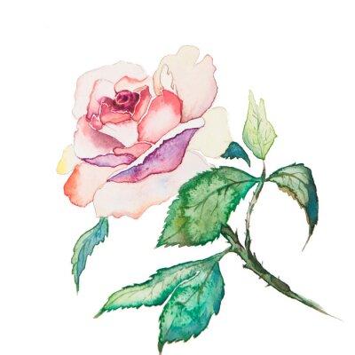 Плакат Весенние цветы Акварель, изолированных на белом фоне