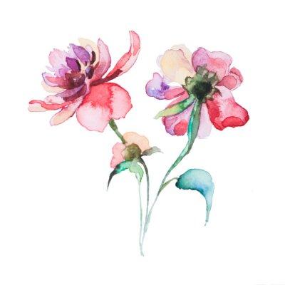 Плакат весенние цветы акварели, изолированных на белом фоне