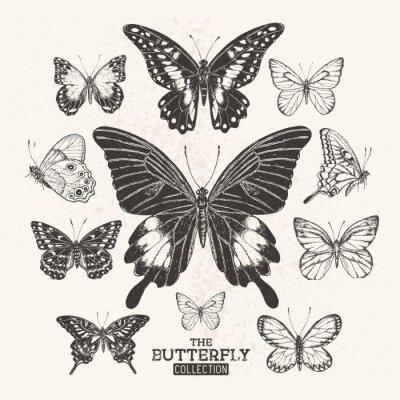 Плакат Коллекция старинных бабочек