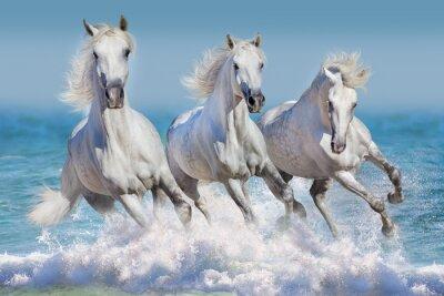 Плакат Три белых коня бежать галопом в волнах в океане