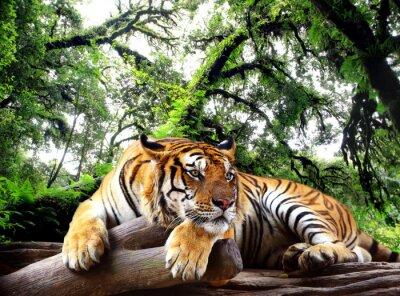 Плакат Тигр глядя что-то на скале в тропических вечнозеленых лесов