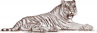 Плакат тигр лежал