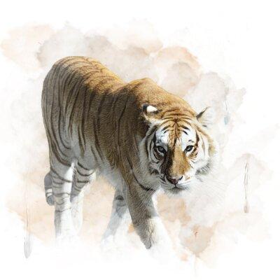 Плакат Тигр Прогулки