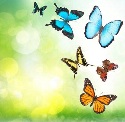Плакат Тропические бабочки в саду