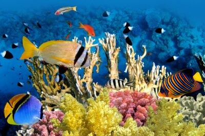 Плакат Тропические рыбы и коралловых рифов