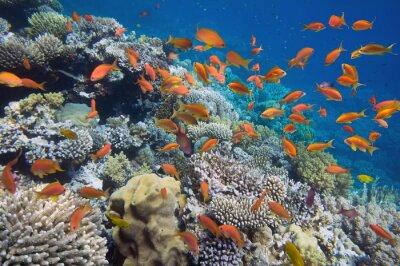 Плакат Тропические рыбы на коралловых рифов