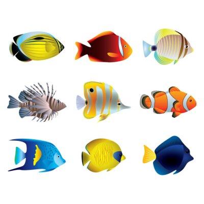 Плакат Тропический векторный набор рыбы