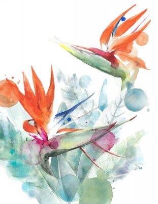 Плакат Тропические цветы птицы рай стрелиция акварель иллюстрации иллюстрации, изолированных на белом фоне