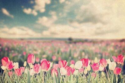 Плакат Tulip цветы луговые сбора винограда