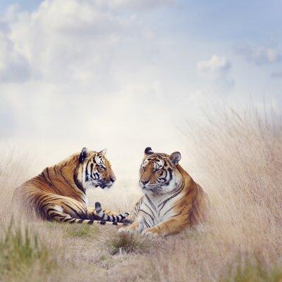 Плакат Два Тигры
