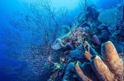 Плакат Подводные коралловые рифы