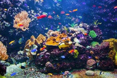 Плакат Подводный сцена с рыбой, коралловый риф
