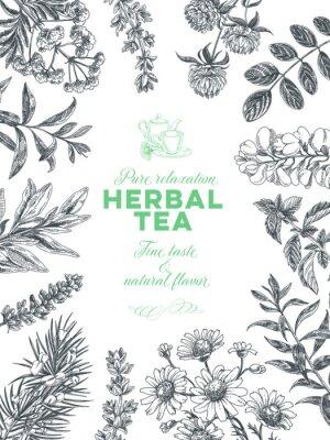 Плакат Vector hand drawn tea herb Illustration.