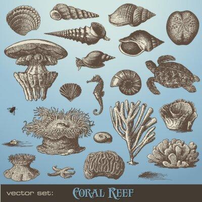 Плакат векторный набор: коралловый риф - разнообразие элементов морского дизайна