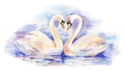 Плакат вектор Акварельные иллюстрации пару белых лебедей