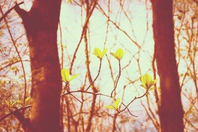 Плакат Урожай лес