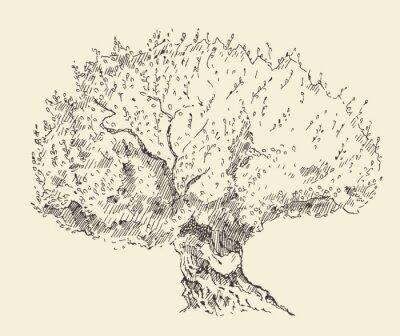 Плакат Урожай оливкового фона иллюстрации Ручной обращается