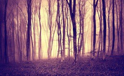 Плакат Урожай фиолетовый желтый цвет мистический свет в страшных лесных ландшафтов.