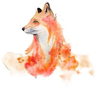 Плакат Watercolor fox  Animal illustration isolated on white background.