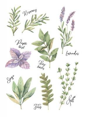 Плакат Акварель иллюстрации. Элементы цветочного дизайна.
