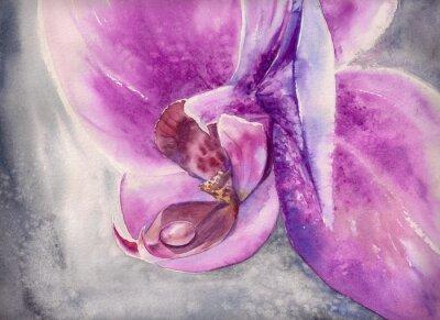 Плакат Акварели пыхтение розовой орхидеи цветок с небольшой каплей воды.