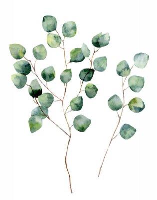Плакат Акварели серебряный доллар эвкалипта с круглыми листьями и ветками. Ручная роспись эвкалипта элементы. Цветочные иллюстрации на белом фоне. Для дизайна, текстиля и фона.