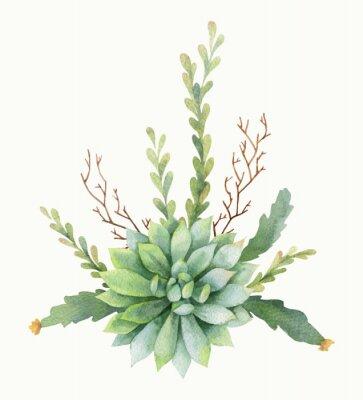 Плакат Акварель вектор букет кактусов и суккулентных растений, изолированных на белом фоне.