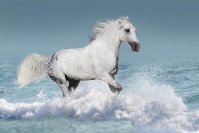 Плакат Белый арабская лошадь бежать галопом в волнах в океане