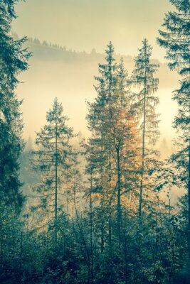 Плакат Дикий лес в осенний сезон время, винтажный стиль тонированное