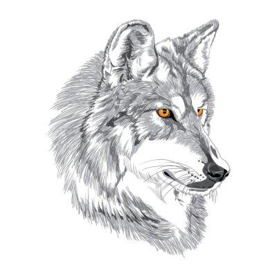 Плакат Волк морда эскиз