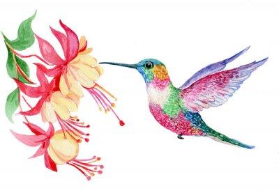 Плакат акварель, маленькая птичка колибри, иллюстрация